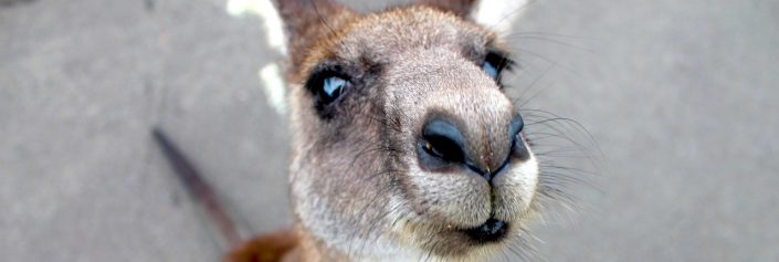 Känguru der Mathematik 2018